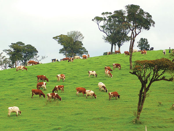 ambewela farms image of lemas.lk
