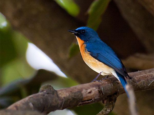 bird sanctuary image of lemas.lk
